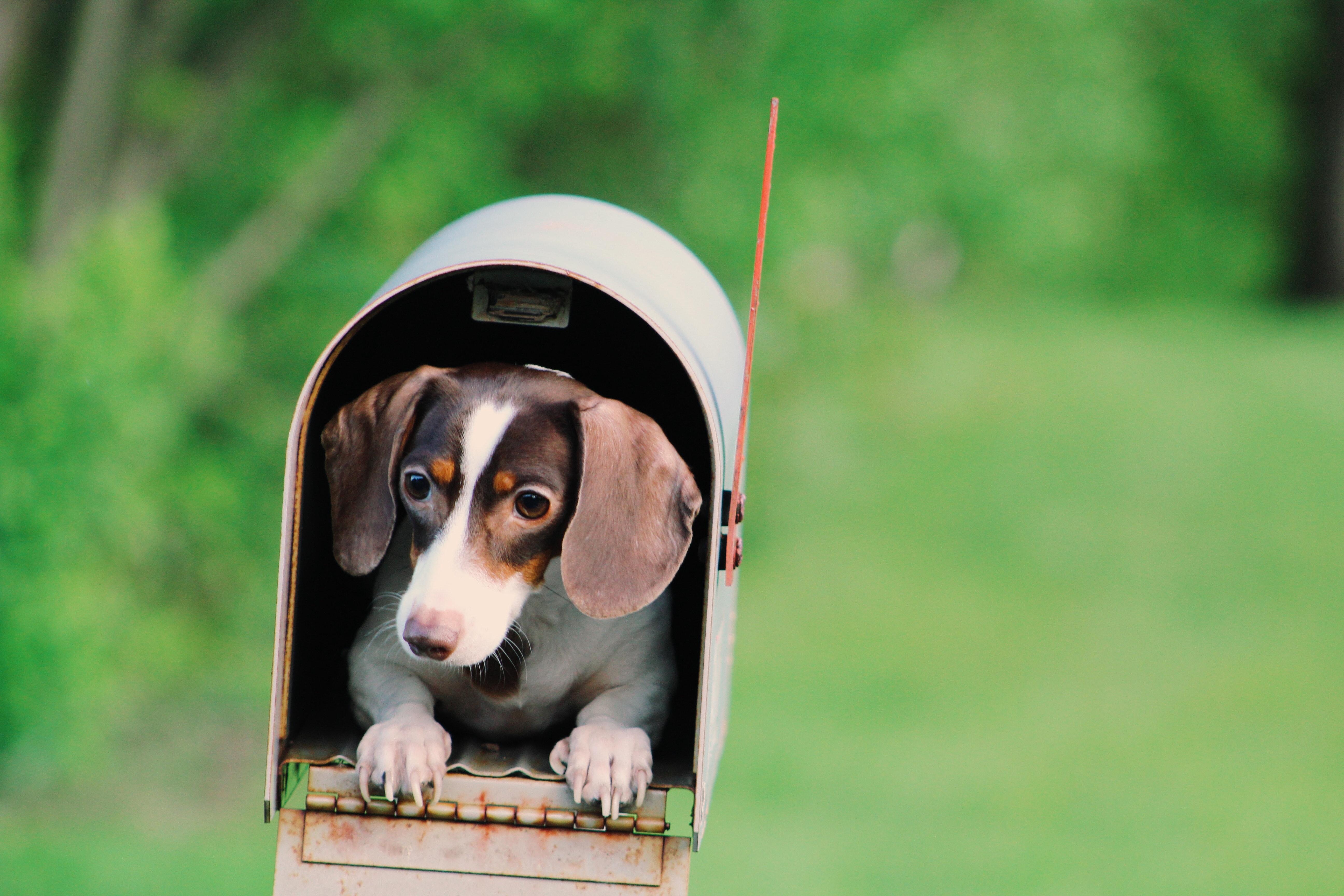 dog-inside-mailbox-906065